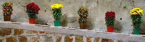 Låt växterna bli en del av designen